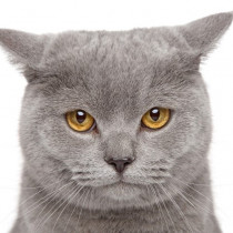 なついてくれないのには理由がある!? 猫を飼うときに注意したい「NG行動」