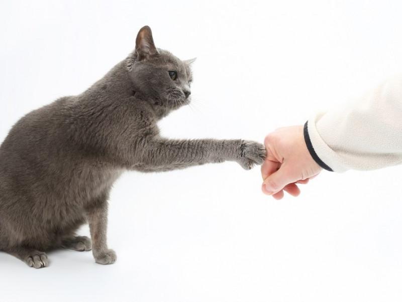 猫も「お手」を覚える!? 飼い主との絆も深まる「芸の活用方法」
