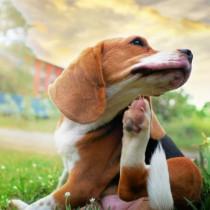 これだけは知っておきたい!犬の「免疫」の基本と免疫系の疾患について