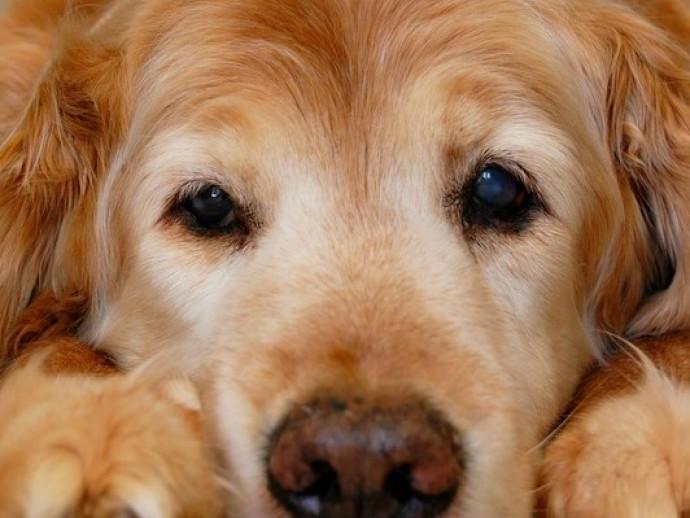 床ずれや皮膚病に注意!注意するべき「シニア犬のケア」について獣医師が解説