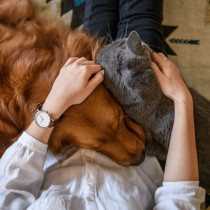 ペットの病気やケガをどう乗り越える?「獣医師」が飼い主さんに伝えたいこと