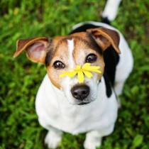 くしゃみや鼻水が増えたら要注意!犬の「花粉症」や似た症状について解説