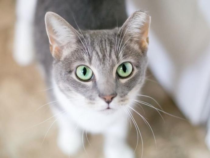 耳が熱いと熱があるって本当?猫の「体調不良」を見極める方法とは