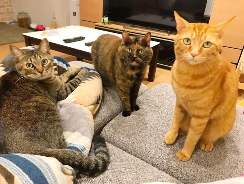 胸キュンが止まらない…!猫を「かわいい」と思う瞬間5選