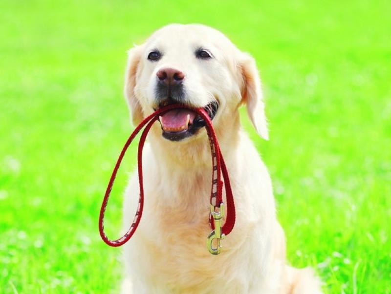 犬の「お散歩グッズ」どうやって片付ける?飼い主さんがラクできる便利な収納術