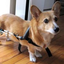 『ペットベリー』に取材!シニア犬の介護を楽にするグッズ4選