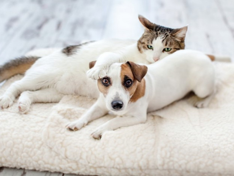 飼い主は犬猫の保険に入るべき?気になる「ペット保険」について獣医師が解説