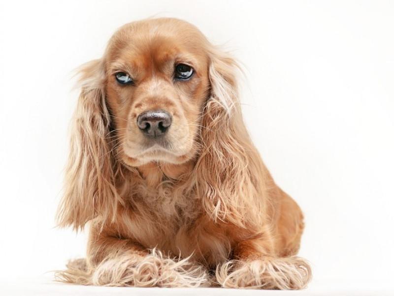 犬の「不機嫌サイン」って?を見逃さないための5つのポイントを紹介