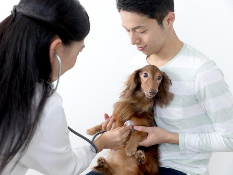 犬のがんと人のがんの違いを押さえよう!犬の「がん」に対して飼い主ができること~第一弾~