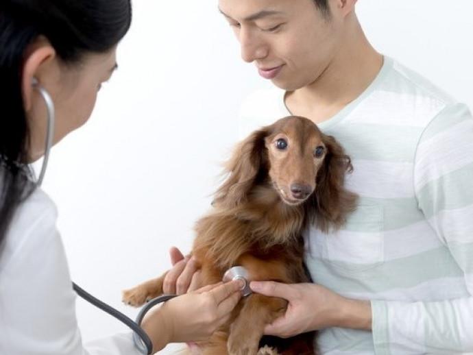 【獣医師執筆】犬のがんと人のがんの違いを押さえよう!犬の「がん」に対して飼い主ができること~第一弾~