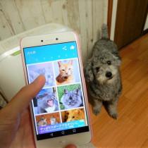 愛犬と一緒に楽しく遊べる!無料の「スマホアプリ」3選
