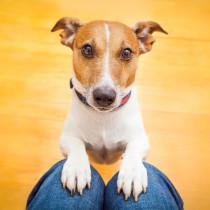 人と犬との関係には諸説ある!? 「α説・赤ちゃん説・共進化仮説」から紐解く