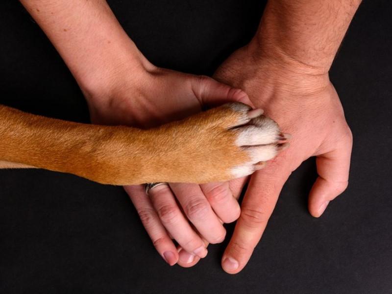 わんにゃの病気やケガに備えよう!「ペット保険」の基礎知識について
