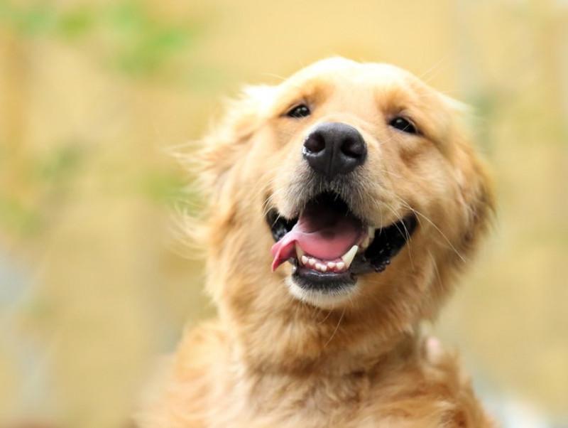 獣医師が感心した!飼い主さんの「愛犬への気遣い」~第2弾~