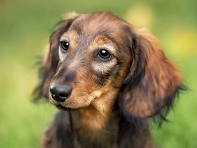 獣医師が感心した!飼い主さんの「愛犬への気遣い」~第3弾~