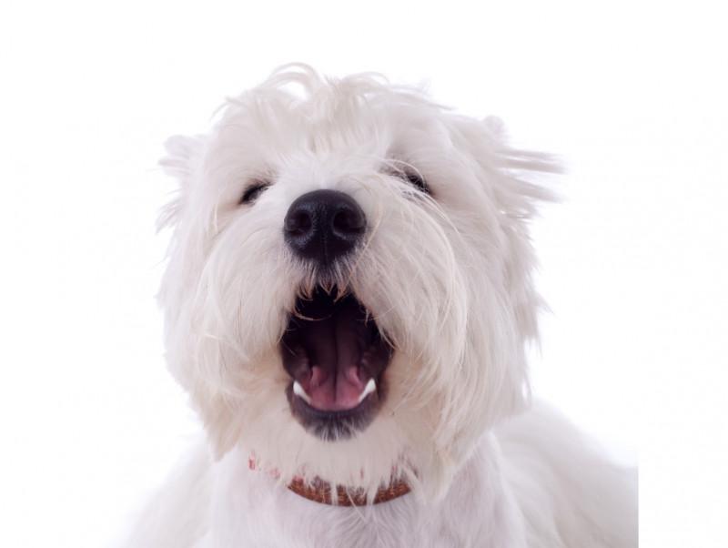 普段の生活を見直して!室内&散歩でよくある犬の「異物誤飲」について