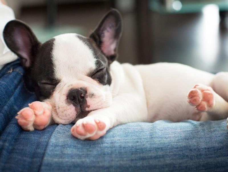 安心のできる場所を用意してあげよう!今日から実践したい犬の「寝かしつけ方法」