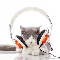 一緒に楽しむことが大切!愛猫と奏でる「音楽」の楽しみ方