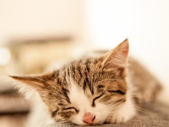 乾燥していたらキケン!? 知っておきたい「猫の鼻」の基本と病気