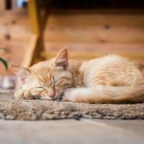 引越しシーズン到来!愛猫を「新しいおうち」に慣れさせるポイント