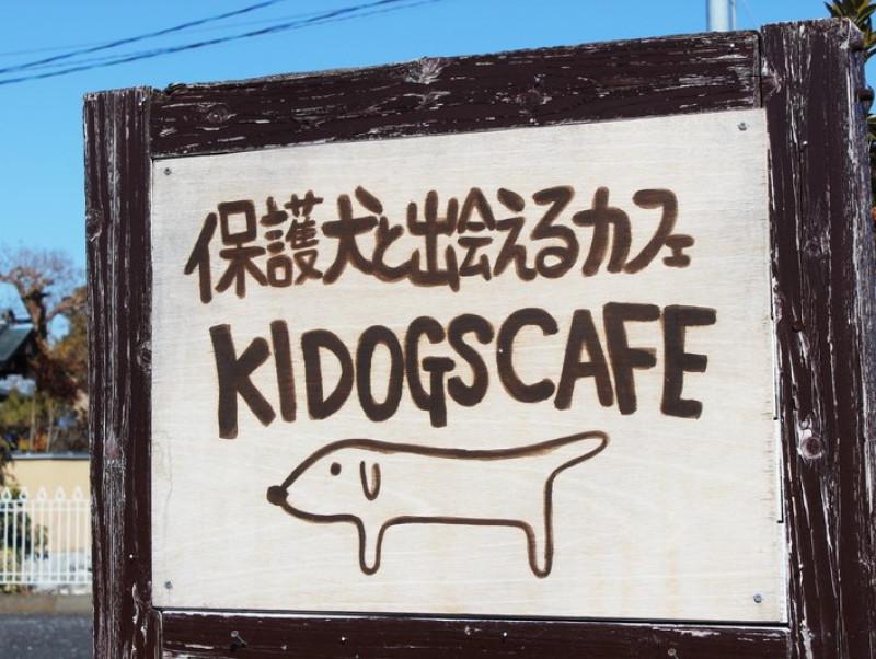 保護犬とふれあえる!茨城県・つくば市『キドックスカフェ』の取り組みに密着