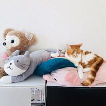 絶対二度見しちゃう!Twitterで見つけた「猫たちの凄い特技」10選