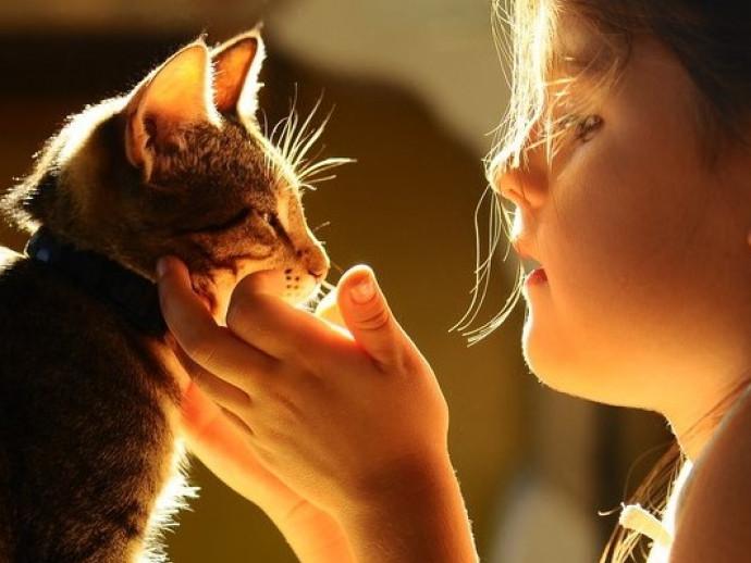 一緒に住むと良いことがたくさんある!猫が「子どもに与える影響」とは