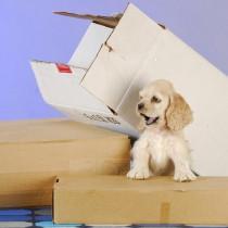 もうすぐ新学期!家族の「環境の変化」が愛犬に与える影響とは
