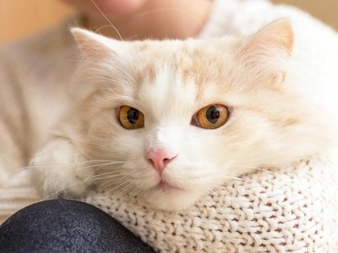 一体、猫の魅力ってなに?獣医師が紐解く「人と猫との関係性」~その1~