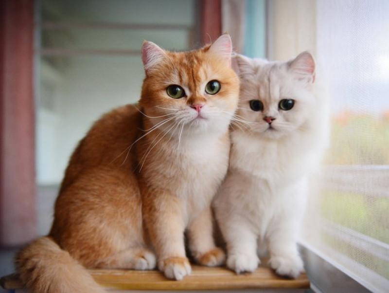 定期的に健康診断を受けよう!猫の「がん」に対して飼い主ができること~第2弾~