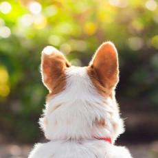 【獣医師執筆】日常の音や声、犬にはどう聞こえる?「耳の仕組み」に関するあれこれ