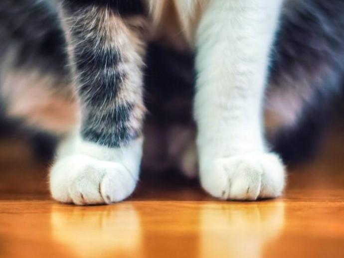 気になる疑問に獣医師が回答!猫の「フミフミ行動」について