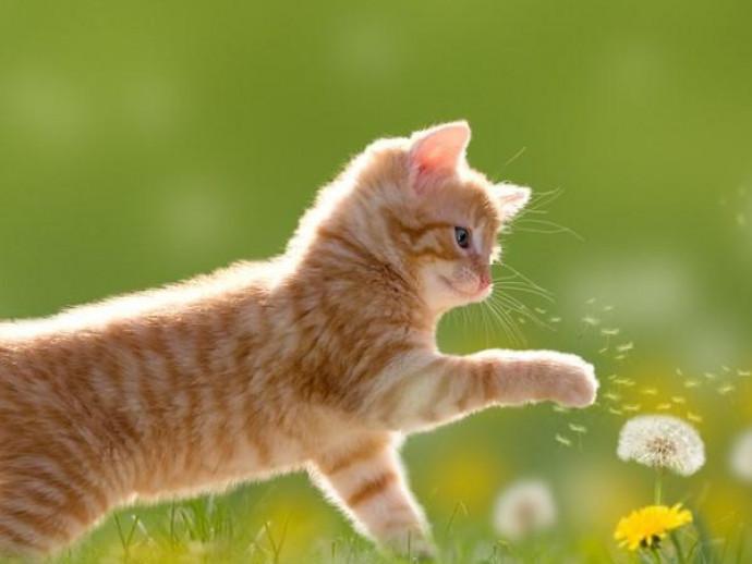 人間だけじゃない!? 猫にも見られる「花粉症」について