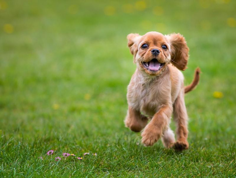 犬の飼い主なら覚えておきたい!「ドッグラン」の基本ルール&マナー