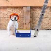 目が悪くなったシニア犬のために!玄関への落下を防ぐ「防止柵」を100均グッズでDIY
