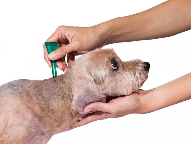 春は「マダニ」に注意!起こりうる疾患を理解して愛犬の健康に努めよう