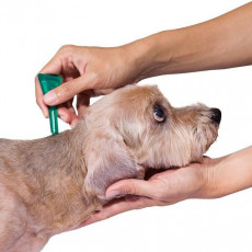 【獣医師執筆】春は「マダニ」に注意!起こりうる疾患を理解して愛犬の健康に努めよう