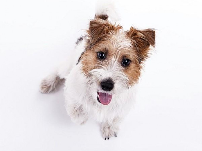 うるうるし過ぎは要注意!? 犬の「涙やけ」の原因&対策について解説
