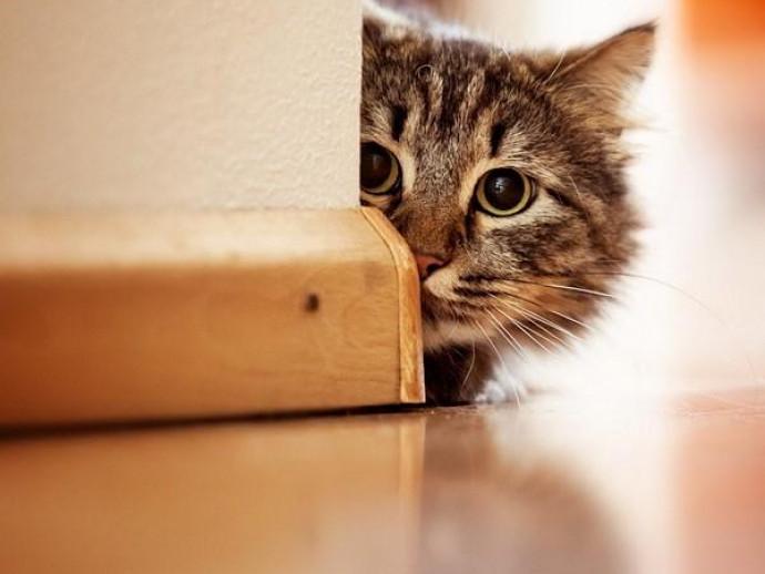 猫は研究者泣かせ!? 獣医師が紐解く「人と猫との関係性」~その2~