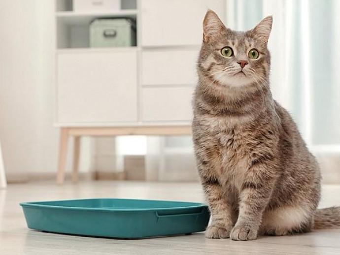 なんだか気になる…!猫の「トイレ臭」をスッキリ取り除く万能アイテム3選
