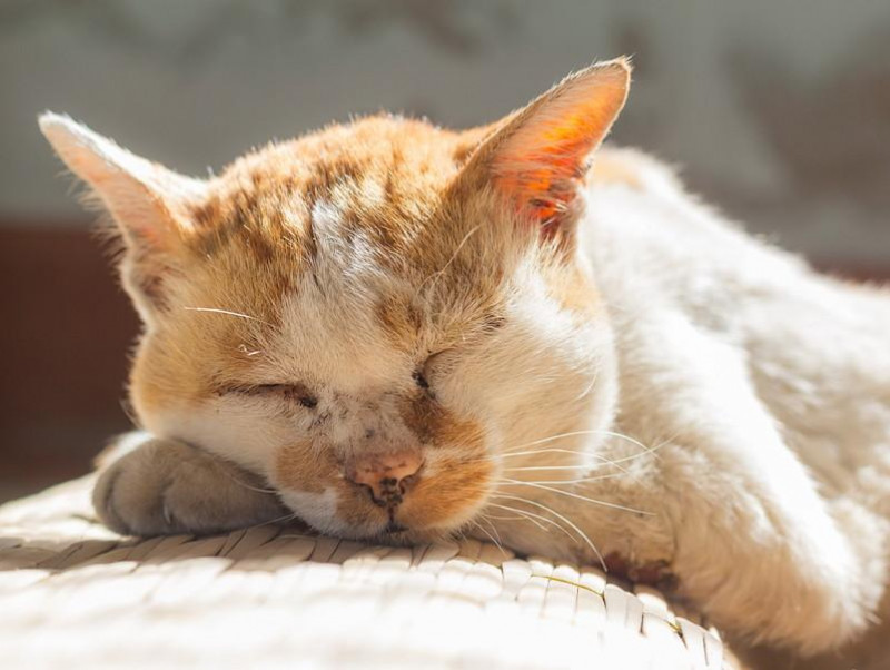 いつまでも長生きしてね。猫の「老化現象」について獣医師が解説