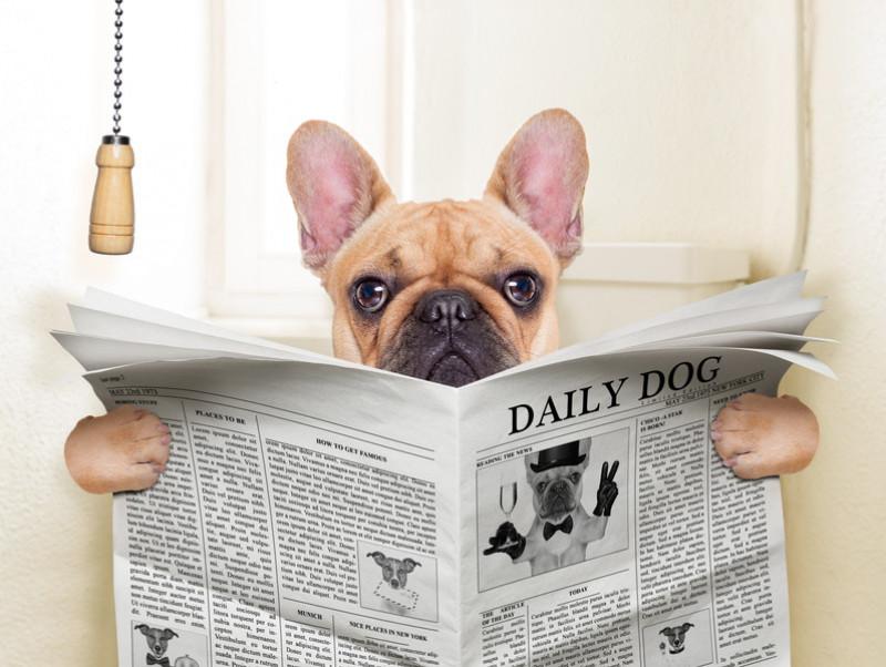 食べ物と病気に要注意!犬が「便秘」になる原因と対処法~前編~