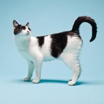 読者の悩みに獣医師が答える!猫の「誤食行動」具体的な理由と対処法