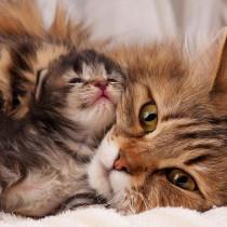恋の道のりは長いニャ!猫の「出産と子育て」について~前編~