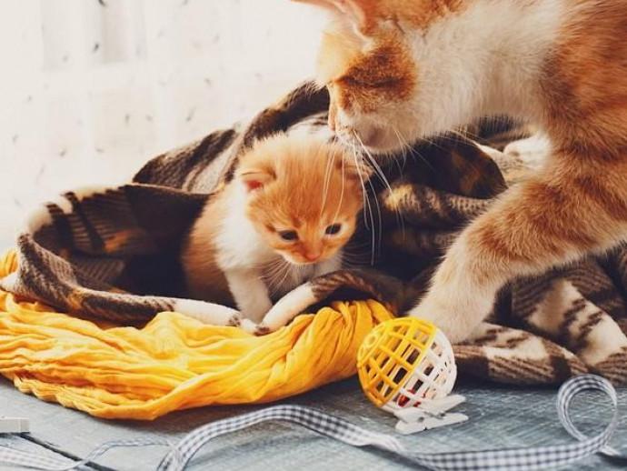 やることがいっぱい!猫の「出産と子育て」について~後編~