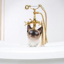 どうして「お風呂」が好きなの?何気ない猫の行動について獣医師が解説