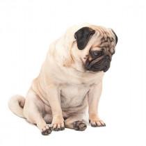 病気に合わせた治療が大切!犬が「便秘」になる原因と対処法~後編~