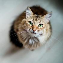 【獣医師執筆】原因はひとつじゃない!猫の「嘔吐」に関する基本知識