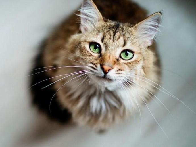 原因はひとつじゃない!猫の「嘔吐」に関する基本知識