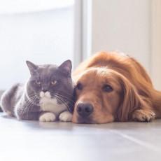 犬や猫も「5月病」になる?実態について動物行動学の専門家が解説